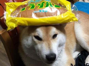滋賀県長浜市「つるや」のサラダパン♪
