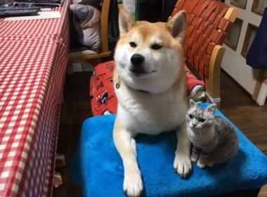 愛猫タラヲの羊毛フェルト♪